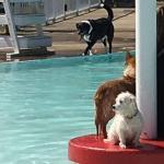 Arkadelphia Aquatic Park