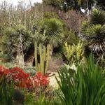 UC Irvine Arboretum