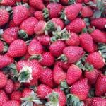 Kasimanis Strawberry Farm
