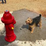Millbrook Dog Park