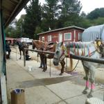 Monterey Bay Equestrian Center