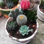 Cactus Point