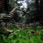 Floresta Estadual Do Palmito