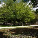 Parque Del Salon De Isabel Ii